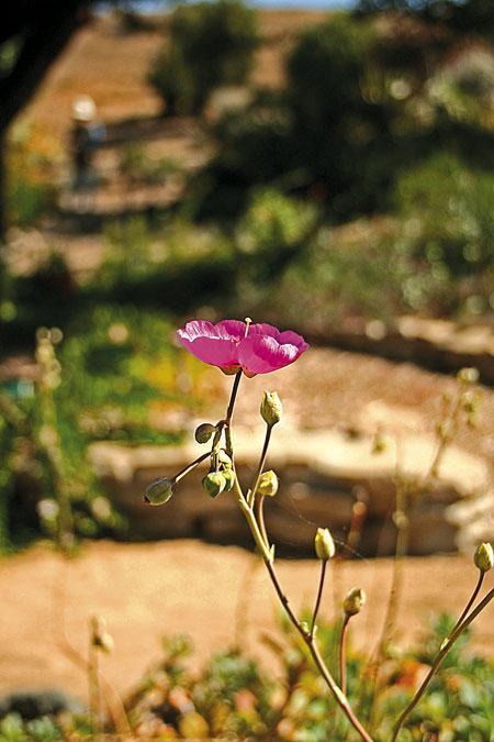 Botanical-Garden-Flowers-2