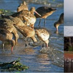 Enjoy the best birdwatching as thousands of birds winter in Morro Bay