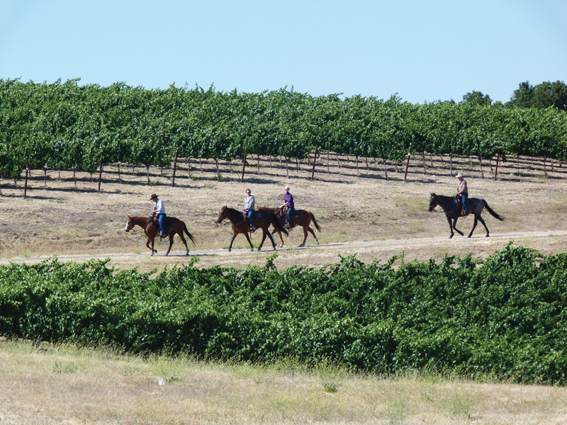 Enjoy the scenery on a ride through vineyards.