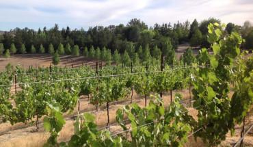 Powell Mountain Cellars vineyard