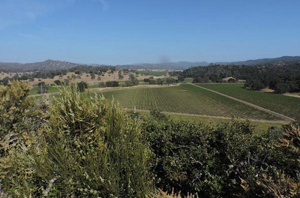 Santa Margarita Ranch Pinot Noir Vineyard