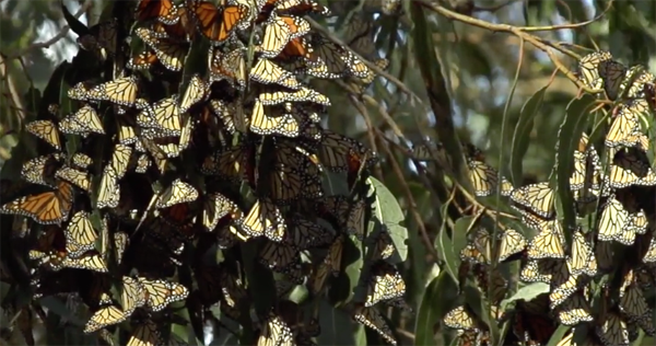 monarch-grove-pismo-beach