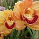 Nipomo Grande Orchids Is A Flower Lover S Paradise San Luis Obispo