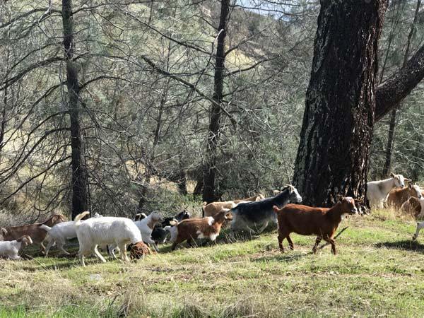 Shangri-La Ranch