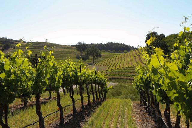 views at opolo winery