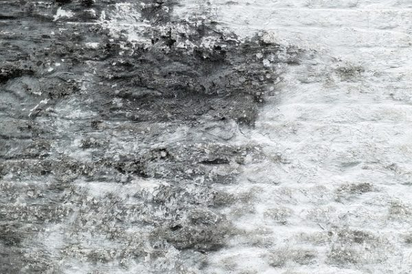 mold damage san luis obispo