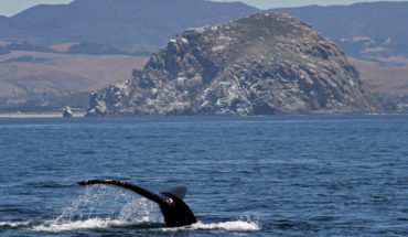 whale watching morro bay