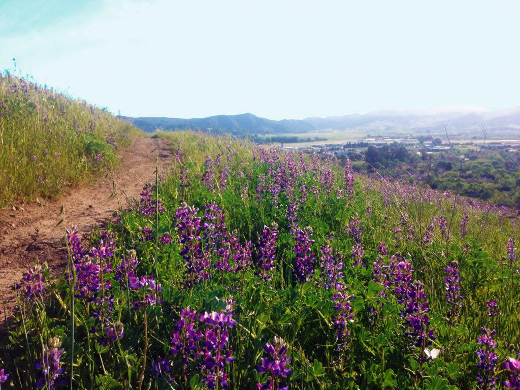 Hiking San Luis Obispo